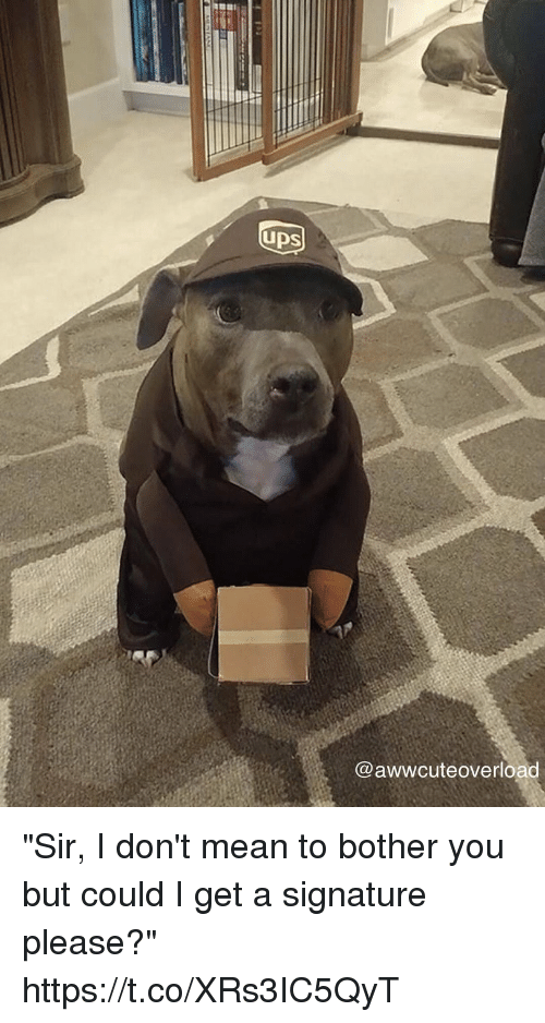 """Mean, Girl Memes, and You: UDS  @awwcuteoverload """"Sir, I don't mean to bother you but could I get a signature please?"""" https://t.co/XRs3IC5QyT"""