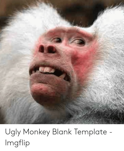 13 ugly animals that shouldnt take a selfie: monkeys