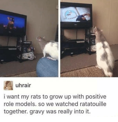 Memes, Ratatouille, and Models: uhrair  i want my rats to grow up with positive  role models. so we watched ratatouille  together. gravy was really into it.