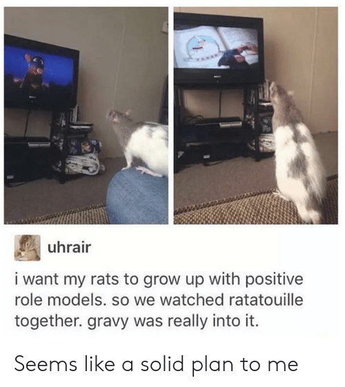 Ratatouille, Models, and Role Models: uhrair  i want my rats to grow up with positive  role models. so we watched ratatouille  together. gravy was really into it Seems like a solid plan to me