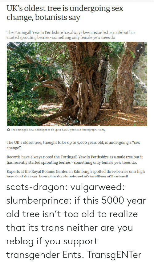 "village: UK's oldest tree is undergoing sex  change, botanists say  The Fortingall Yew in Perthshire has always been recorded as male but has  started sprouting berries-something only female yew trees do  The Fortingall Yew is thought to be up to 5,000 years old Photograph: Alamy  The UK's oldest tree, thought to be up to 5,000 years old, is undergoing a ""sex  change""  Records have always noted the Fortingall Yew in Perthshire as a male tree but it  has recently started sprouting berries - something only female yew trees do.  Experts at the Royal Botanic Garden in Edinburgh spotted three berries on a high  branch off the trae located in the churchvard of tho village of Fortinaall scots-dragon: vulgarweed:  slumberprince:  if this 5000 year old tree isn't too old to realize that its trans neither are you  reblog if you support transgender Ents.  TransgENTer"