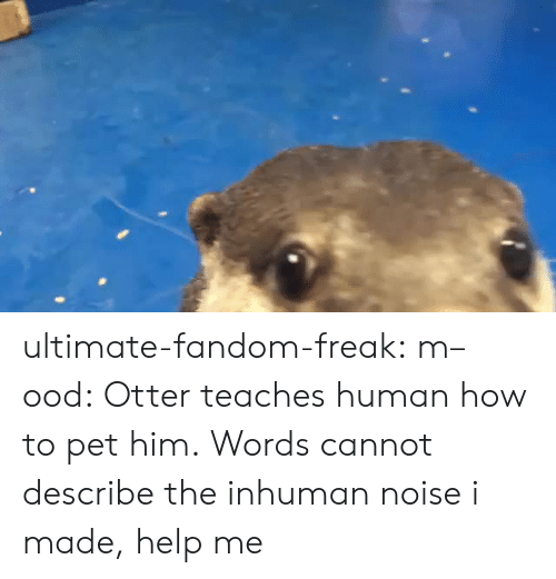 otter: ultimate-fandom-freak:  m–ood: Otter teaches human how to pet him. Words cannot describe the inhuman noise i made, help me
