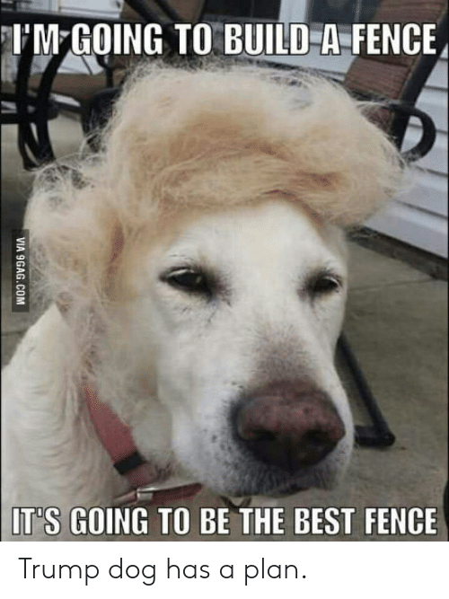 Dog Has: UM GOING TO BUILD A FENCE  IT'S GOING TO BE THE BEST FENCE  VIA 9GAG.COM Trump dog has a plan.