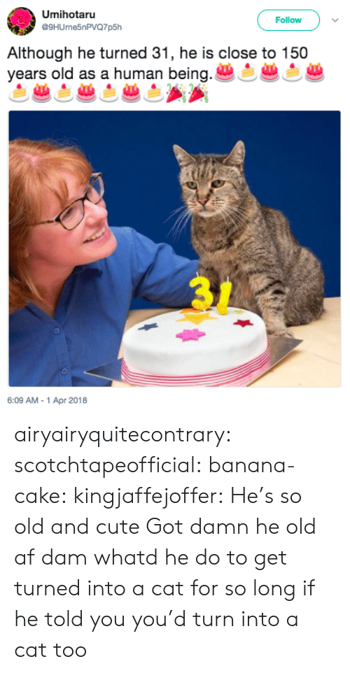 Af, Cute, and Tumblr: Umihotaru  @9HUrne5nPVQ7p5h  Follow  Although he turned 31, he is close to 150  vears old as a human being  6:09 AM-1 Apr 2018 airyairyquitecontrary:  scotchtapeofficial: banana-cake:  kingjaffejoffer:  He's so old and cute  Got damn he old af  dam whatd he do to get turned into a cat for so long  if he told you you'd turn into a cat too
