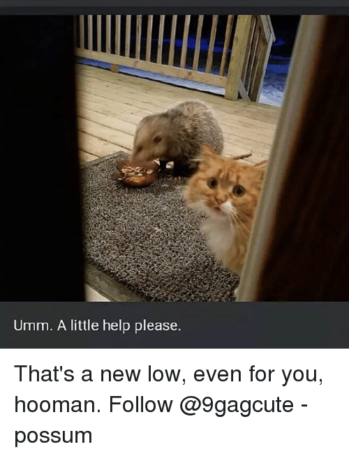 Memes, Help, and Possum: Umm. A little help please. That's a new low, even for you, hooman. Follow @9gagcute - possum
