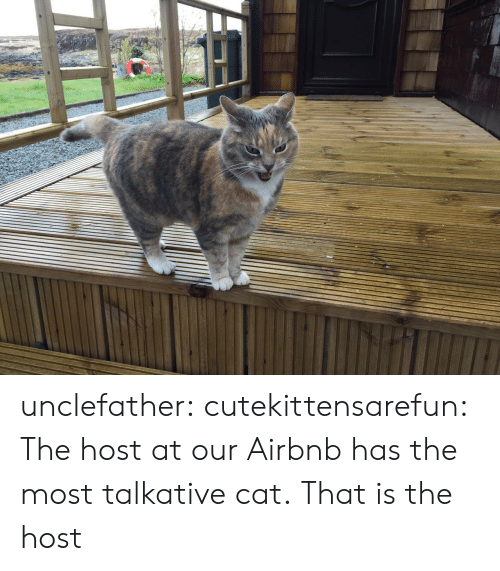 Tumblr, Airbnb, and Blog: unclefather:  cutekittensarefun: The host at our Airbnb has the most talkative cat.  That is the host