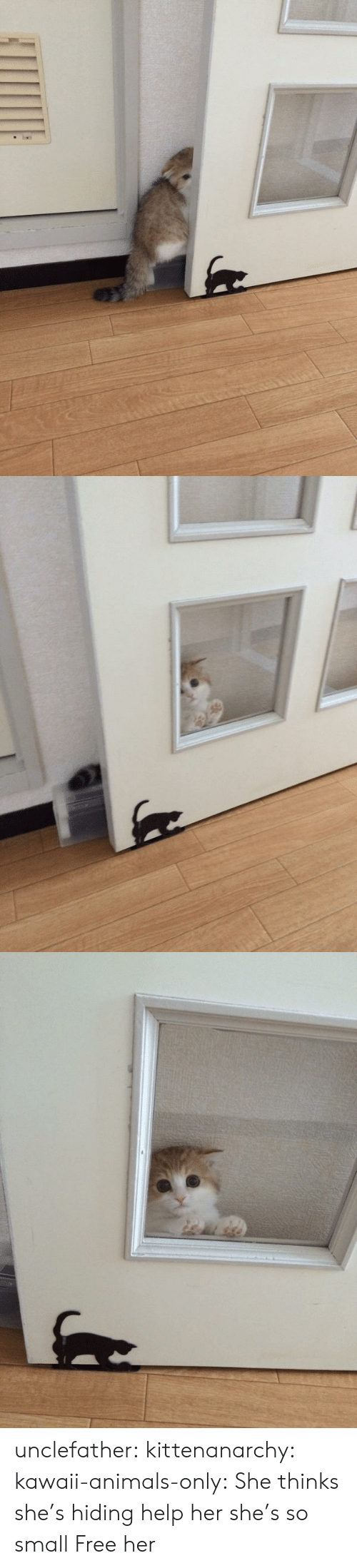 Free Her: unclefather:  kittenanarchy:  kawaii-animals-only:  She thinks she's hiding  help her she's so small   Free her