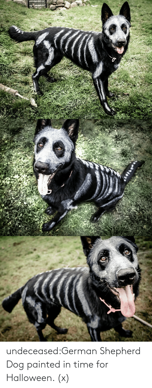 Halloween: undeceased:German Shepherd Dog painted in time for Halloween. (x)