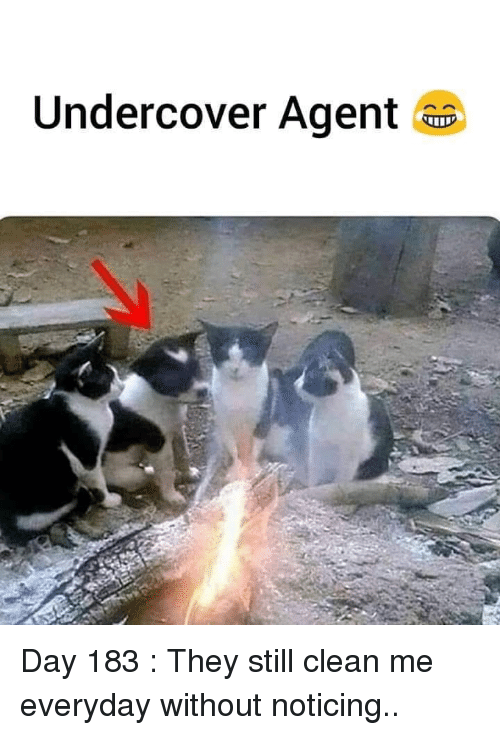 noticing: Undercover Agent a Day 183 : They still clean me everyday without noticing..