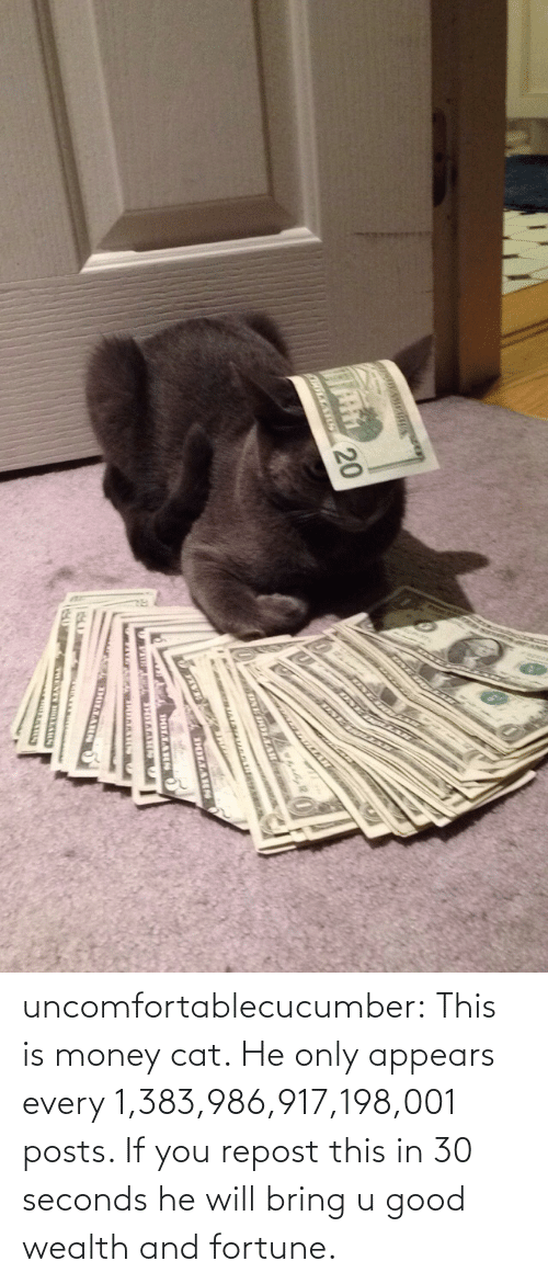 money cat: UNE  RCKAR 20  ONE OLAARC  www .  DOLLARS  DOLLARA  TOLLARN uncomfortablecucumber:  This is money cat. He only appears every 1,383,986,917,198,001 posts. If you repost this in 30 seconds he will bring u good wealth and fortune.