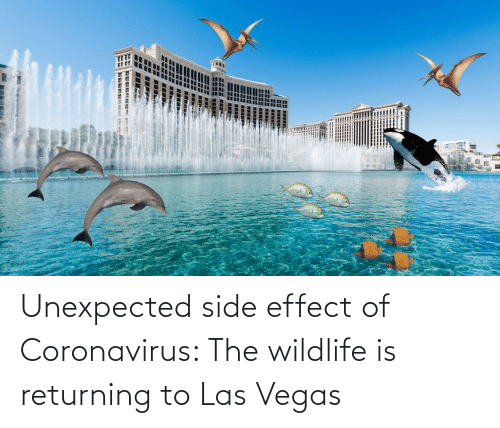 effect: Unexpected side effect of Coronavirus: The wildlife is returning to Las Vegas