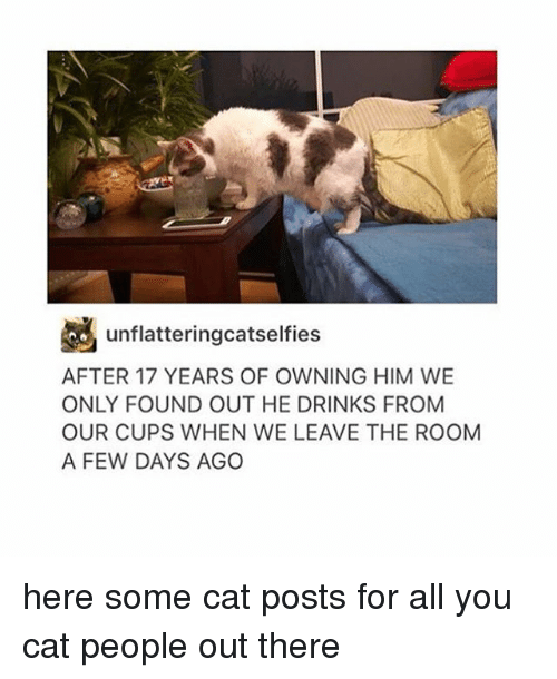 Memes, 🤖, and Cat: unflatteringcatselfies  AFTER 17 YEARS OF OWNING HIM WE  ONLY FOUND OUT HE DRINKS FROM  OUR CUPS WHEN WE LEAVE THE ROOM  A FEW DAYS AGO here some cat posts for all you cat people out there