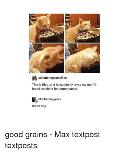 Memes, Moms, and Good: unflatteringcatselfies  This is Rico, and he suddenly loves my mom's  bread machine for some reason  blubbernuggetss  bread boy good grains - Max textpost textposts