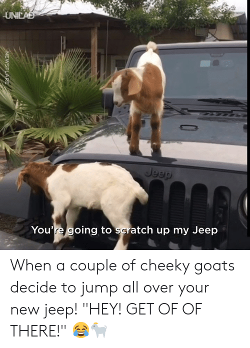 """goats: UNICAD  Jeep  You're going to scratch up my Jeep  NEWSFLARE When a couple of cheeky goats decide to jump all over your new jeep! """"HEY! GET OF OF THERE!"""" 😂🐐"""