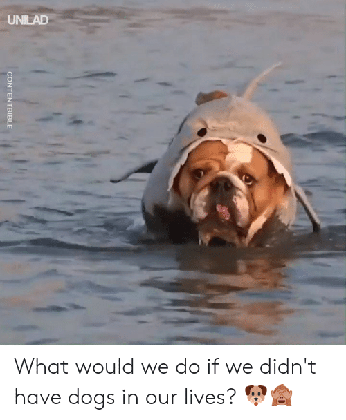 Dank, Dogs, and 🤖: UNILAD  CONTENTBIBLE What would we do if we didn't have dogs in our lives? 🐶🙈