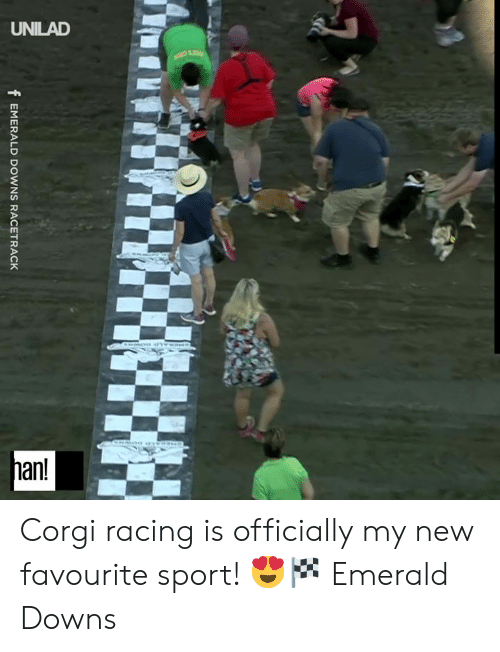 Corgi, Dank, and 🤖: UNILAD  han!  fEMERALD DOWNS RACETRACK Corgi racing is officially my new favourite sport! 😍🏁  Emerald Downs