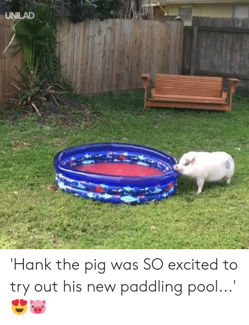 Hank: UNILAD 'Hank the pig was SO excited to try out his new paddling pool...' 😍🐷