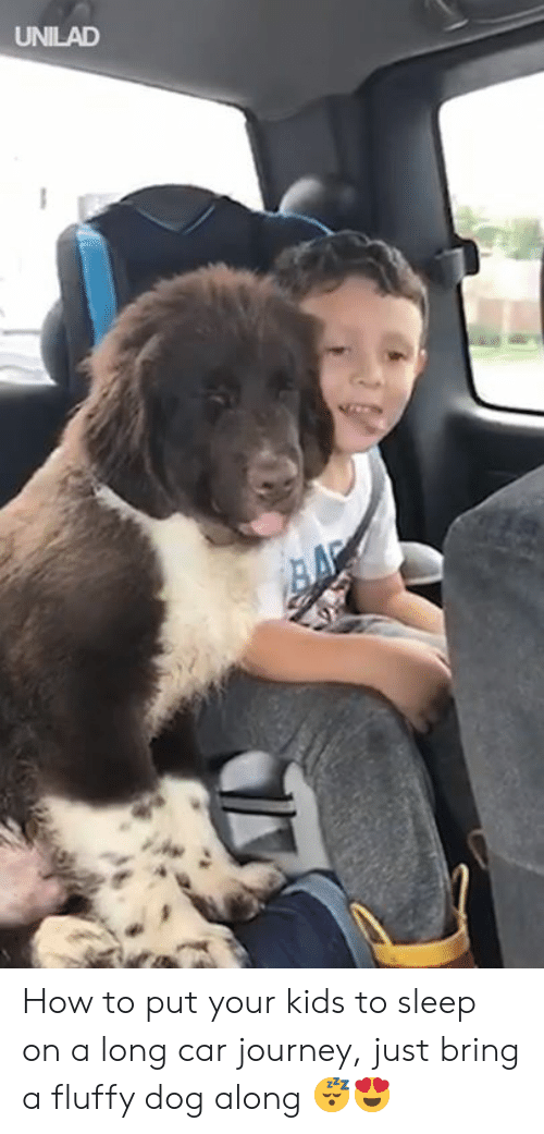 Dank, Journey, and How To: UNILAD How to put your kids to sleep on a long car journey, just bring a fluffy dog along 😴😍