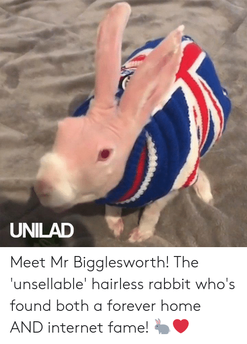 Dank, Internet, and Forever: UNILAD Meet Mr Bigglesworth! The 'unsellable' hairless rabbit who's found both a forever home AND internet fame! 🐇❤