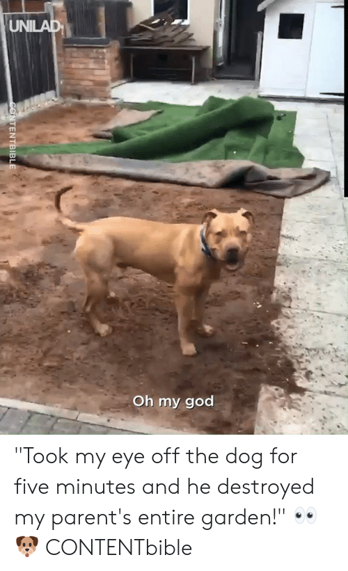 """Dank, God, and Oh My God: UNILAD  Oh my god  CONTENTBIBLE """"Took my eye off the dog for five minutes and he destroyed my parent's entire garden!"""" 👀🐶  CONTENTbible"""