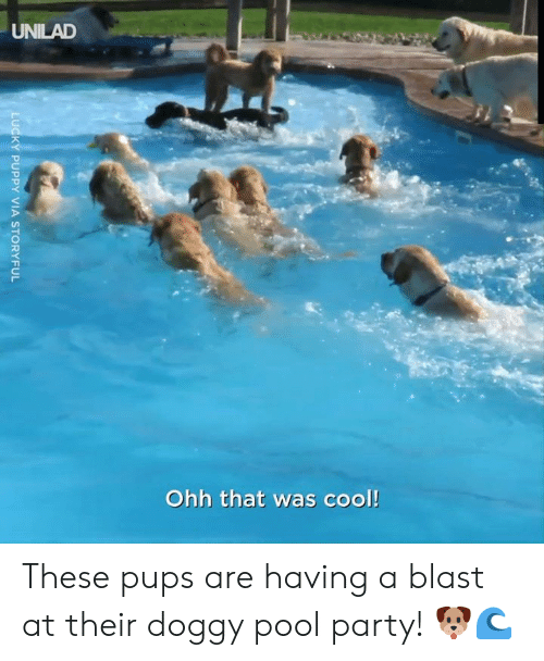 unilad: UNILAD  Ohh that was cool!  LUCKY PUPPY VIA STORYFUL These pups are having a blast at their doggy pool party! 🐶🌊