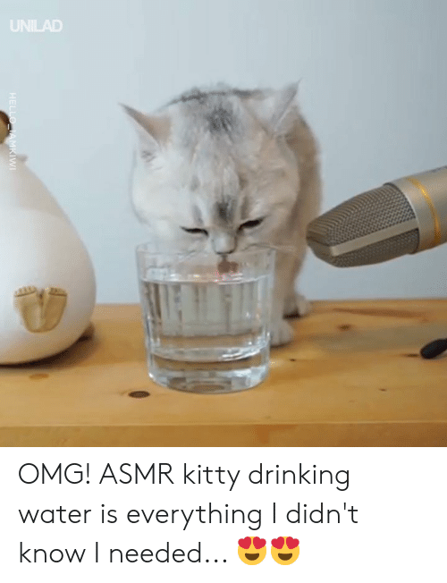 Asmr: UNILAD OMG! ASMR kitty drinking water is everything I didn't know I needed... 😍😍