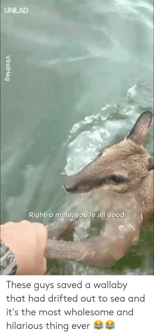 Dank, Good, and Hilarious: UNILAD  Right-o mate, you're all good These guys saved a wallaby that had drifted out to sea and it's the most wholesome and hilarious thing ever 😂😂