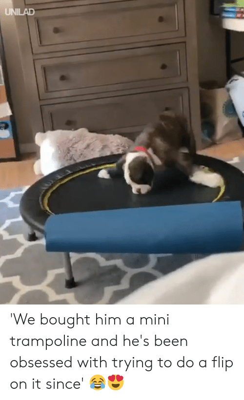 Dank, Trampoline, and Been: UNILAD 'We bought him a mini trampoline and he's been obsessed with trying to do a flip on it since' 😂😍