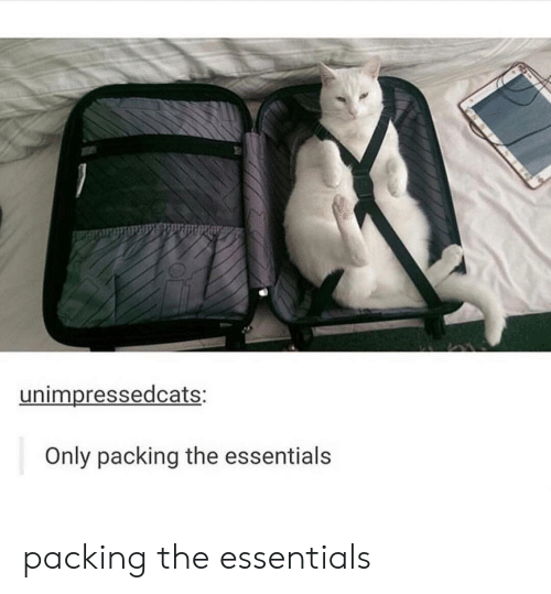 packing: unimpressedcats:  Only packing the essentials packing the essentials