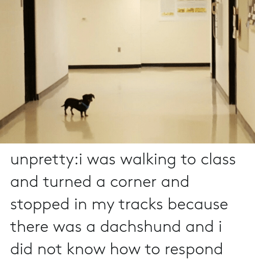 And I Did: unpretty:i was walking to class and turned a corner and stopped in my tracks because there was a dachshund and i did not know how to respond