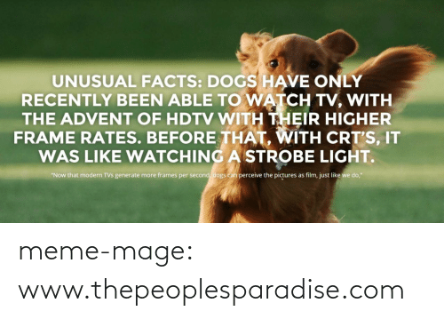 """Per Second: UNUSUAL FACTS: DOGS HAVE ONLY  RECENTLY BEEN ABLE TO WATCH TV, WITH  THE ADVENT OF HDTV WITH THEIR HIGHER  FRAME RATES. BEFORE THAT, WITH CRT'S, IT  WAS LIKE WATCHING A STROBE LIGHT.  """"Now that modern TVs generate more frames per second, dogs can perceive the pictures as film, just like we do,"""" meme-mage:    www.thepeoplesparadise.com"""