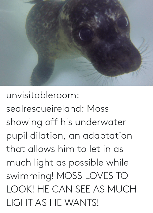 loves: unvisitableroom:  sealrescueireland: Moss showing off his underwater pupil dilation, an adaptation that allows him to let in as much light as possible while swimming! MOSS LOVES TO LOOK! HE CAN SEE AS MUCH LIGHT AS HE WANTS!
