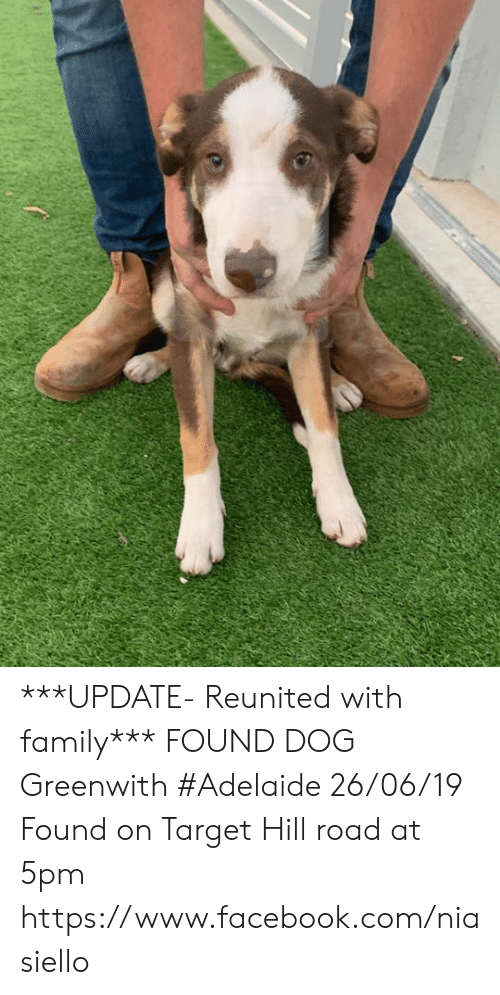 Facebook, Family, and Memes: ***UPDATE- Reunited with family***  FOUND DOG Greenwith #Adelaide 26/06/19 Found on Target Hill road at 5pm https://www.facebook.com/niasiello