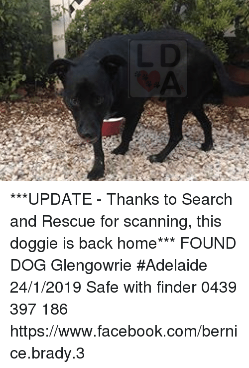 bernice: ***UPDATE - Thanks to Search and Rescue for scanning, this doggie is back home***  FOUND DOG Glengowrie #Adelaide 24/1/2019 Safe with finder 0439 397 186 https://www.facebook.com/bernice.brady.3