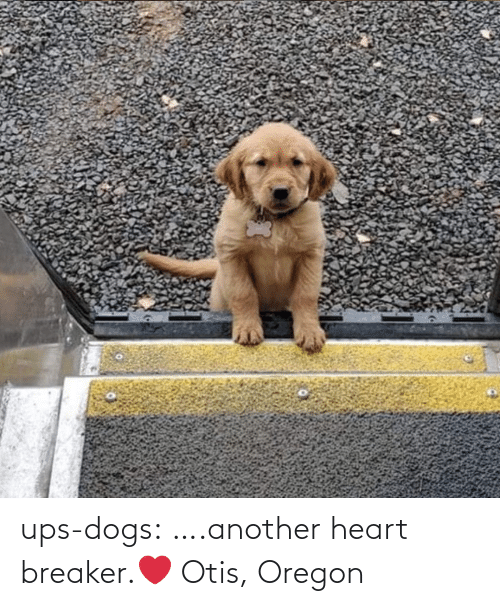 UPS: ups-dogs:  ….another heart breaker.❤ Otis, Oregon