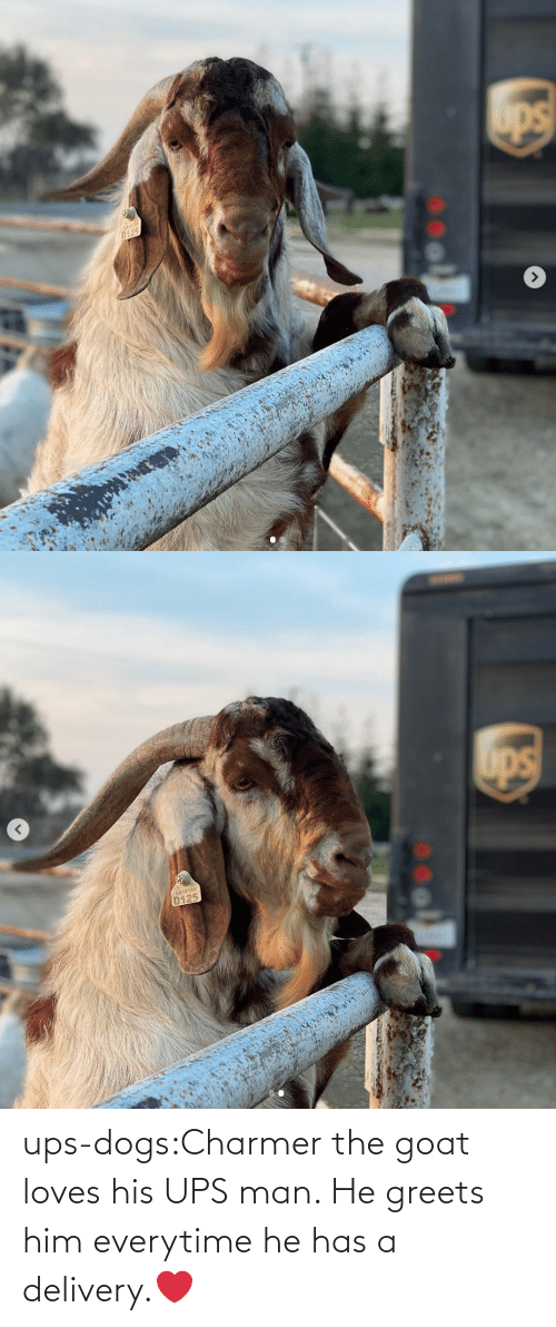 UPS: ups-dogs:Charmer the goat loves his UPS man. He greets him everytime he has a delivery.❤️