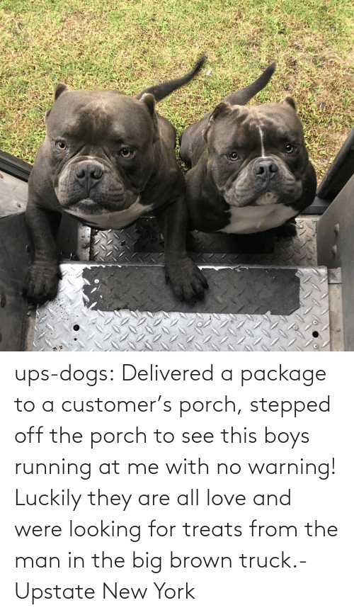 UPS: ups-dogs:  Delivered a package to a customer's porch, stepped off the porch to see this boys running at me with no warning! Luckily they are all love and were looking for treats from the man in the big brown truck.- Upstate New York