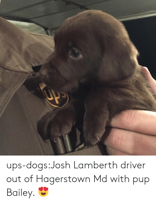 Dogs, Target, and Tumblr: ups-dogs:Josh Lamberth driver out of Hagerstown Md with pup Bailey. 😍