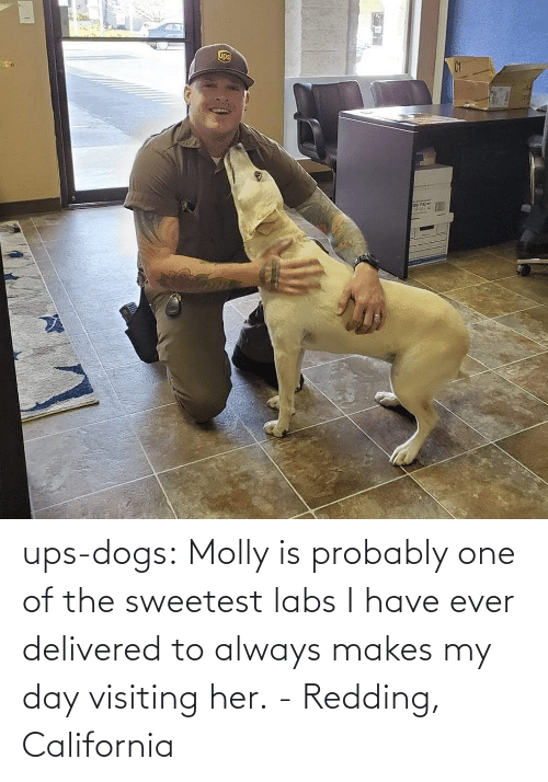 UPS: ups-dogs:  Molly is probably one of the sweetest labs I have ever delivered to always makes my day visiting her. - Redding, California