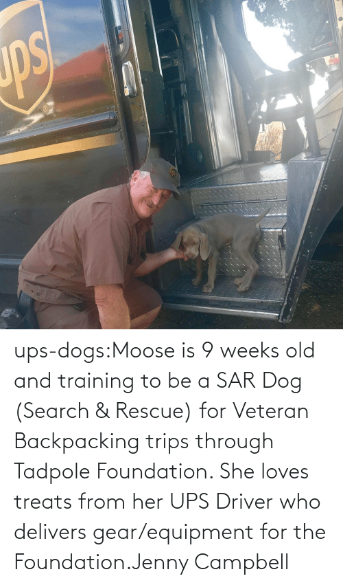 Search: ups-dogs:Moose is 9 weeks old and training to be a SAR Dog (Search & Rescue) for Veteran Backpacking trips through Tadpole Foundation. She loves treats from her UPS Driver who delivers gear/equipment for the Foundation.Jenny Campbell
