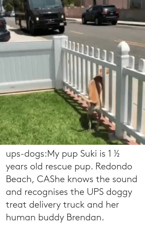 Old: ups-dogs:My pup Suki is 1 ½ years old rescue pup. Redondo Beach, CAShe knows the sound and recognises the UPS doggy treat delivery truck and her human buddy Brendan.