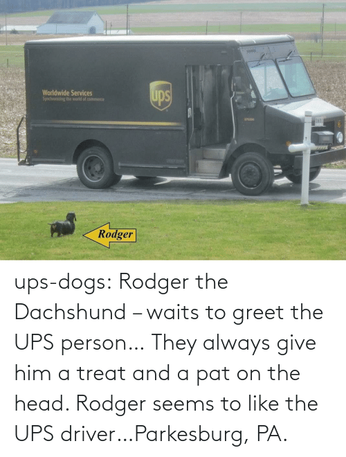 Give: ups-dogs:  Rodger the Dachshund – waits to greet the UPS person… They always give him a treat and a pat on the head. Rodger seems to like the UPS driver…Parkesburg, PA.