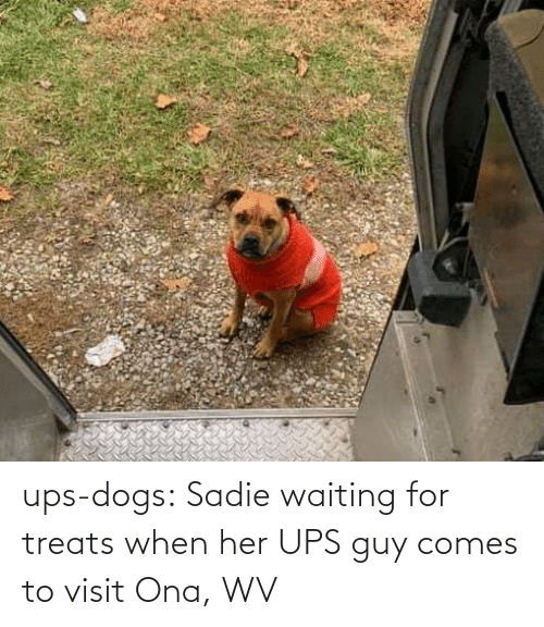 UPS: ups-dogs:  Sadie waiting for treats when her UPS guy comes to visit Ona, WV