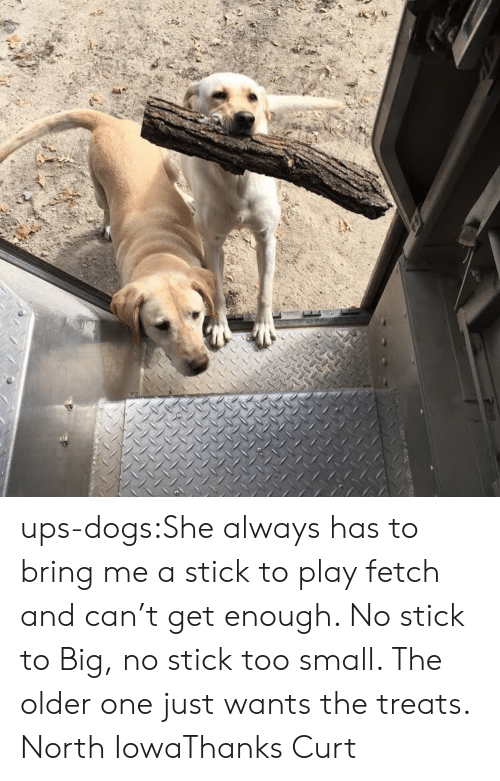 Iowa: ups-dogs:She always has to bring me a stick to play fetch and can't get enough. No stick to Big, no stick too small. The older one just wants the treats. North IowaThanks Curt