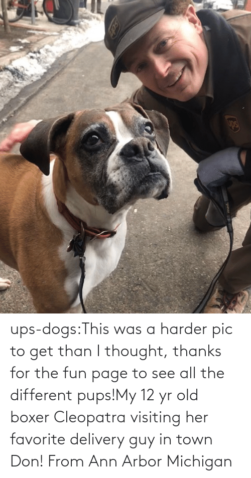 Michigan: ups-dogs:This was a harder pic to get than I thought, thanks for the fun page to see all the different pups!My 12 yr old boxer Cleopatra visiting her favorite delivery guy in town Don! From Ann Arbor Michigan