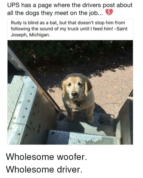 Dogs, Ups, and Michigan: UPS has a page where the drivers post about  all the dogs they meet on the job...  Rudy is blind as a bat, but that doesn't stop him from  following the sound of my truck until I feed him! -Saint  Joseph, Michigan. Wholesome woofer. Wholesome driver.