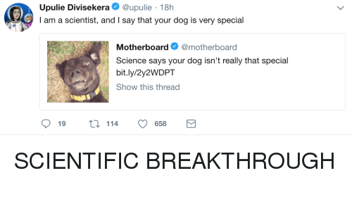 Science, Dog, and Motherboard: Upulie Divisekeraupulie 18h  I am a scientist, and I say that your dog is very special  Motherboard Ф @motherboard  Science says your dog isn't really that special  bit.ly/2y2WDPT  Show this thread  19  t114 658 SCIENTIFIC BREAKTHROUGH