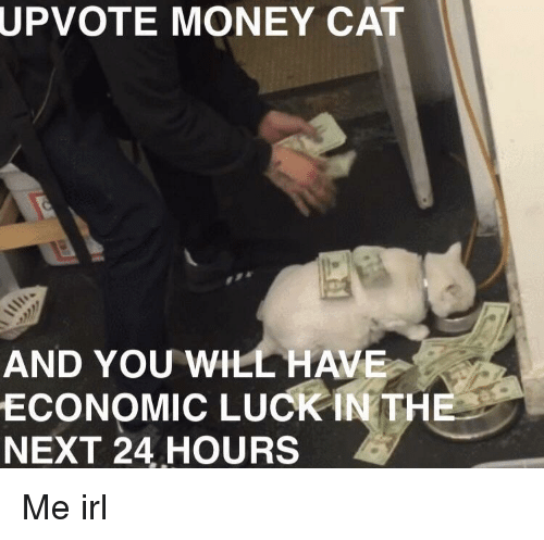 Money, Luck, and Irl: UPVOTE  MONEY CAT  AND YOU WILL HAVE  ECONOMIC LUCK İNTHE  NEXT 24 HOURS Me irl