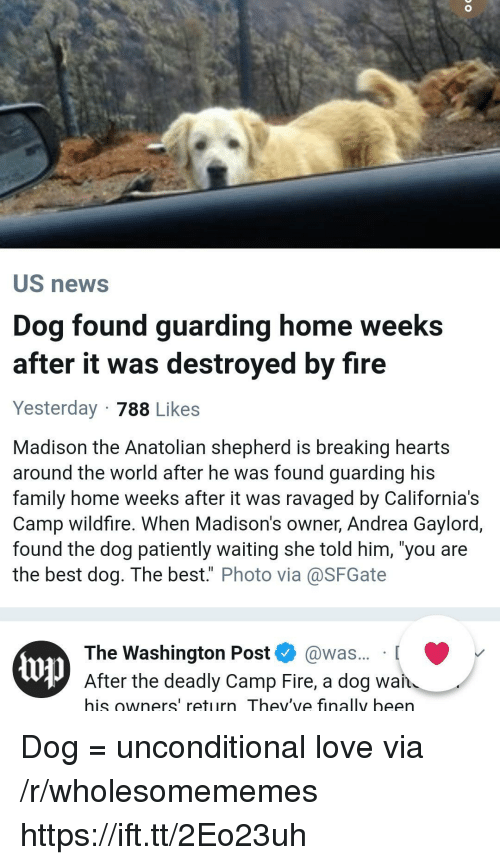 """Family, Fire, and Love: US news  Dog found guarding home weeks  after it was destroyed by fire  Yesterday 788 Likes  Madison the Anatolian shepherd is breaking hearts  around the world after he was found guarding his  family home weeks after it was ravaged by California's  Camp wildfire. When Madison's owner, Andrea Gaylord,  found the dog patiently waiting she told him, 'you are  the best dog. The best."""" Photo via@SFGate  The Washington Post @was... [  up  After the deadly Camp Fire, a dog wan  his owners' return Thev've finally been Dog = unconditional love via /r/wholesomememes https://ift.tt/2Eo23uh"""