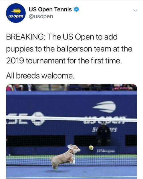 Puppies, Tennis, and Time: US Open Tennis  @usopen  us open  BREAKING: The US Open to add  puppies to the ballperson team at the  2019 tournament for the first time.  All breeds welcome